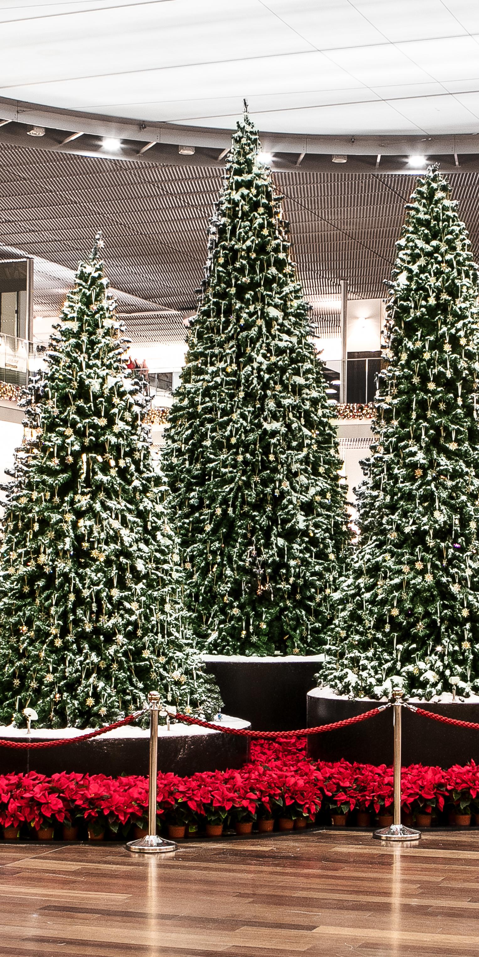 Weihnachten Shoppi Tivoli Weihnachtsbäume